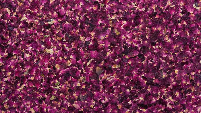 Organoid Rosenblüten